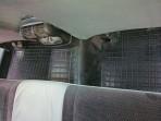 Коврики в салон автомобиля Опель Омега (Б) 1994- Автогум полиуре